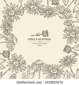 Background with arnica montana: arnica flower and leaves. Cosmetic and medical plant. Vector hand drawn illustration