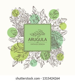 Background with arugula and bunch of arugula. Vector hand drawn illustration.