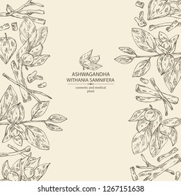 Background with ashwagandha: branch, root and berries of withania somnifera . Cosmetic and medical plant. Vector hand drawn illustration.