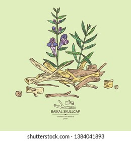 Background with baikal skullcap: baikal skullcap flowering branch and root. Cosmetic and medical plant. Vector hand drawn illustration