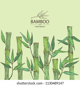 Background with bamboo: bamboo stalk and leaves. Vector hand drawn illustration.