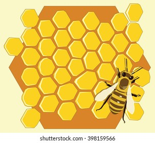 Background with bees and honeycombs. Vector illustration.