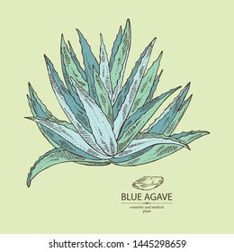 Background with blue agave: blue agave plant and leaves. Cosmetics and medical plant. Vector hand drawn illustration.