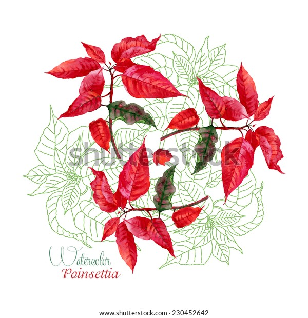Background  with bouquet of red poinsettia. Vector watercolor illustration