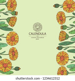 Background with calendula: calendula plant, leaves and calendula bud and flowers. Cosmetics and medical plant. Vector hand drawn illustration.