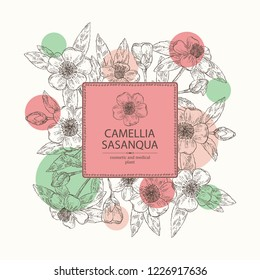 Background with camellia sasanqua: leaves, camellia sasanqua flowers and bud. Cosmetic, perfumery and medical plant. Vector hand drawn illustration