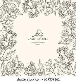 Background with camphor: Camphor Tree, leaves, berries and camphor flowers. Perfumery, cosmetics and medical plant. Vector hand drawn illustration