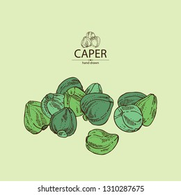 Background with caper: caper bud flower. Vector hand drawn illustration.