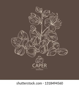 Background with caper: caper bud and flower . Vector hand drawn illustration.
