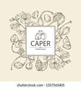 Background with caper: caper bud, pod and flower. Vector hand drawn illustration.