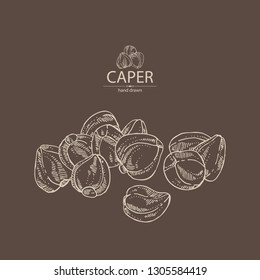 Background with caper: caper bud. Vector hand drawn illustration.