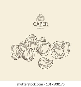 Background with caper: caper bud . Vector hand drawn illustration.