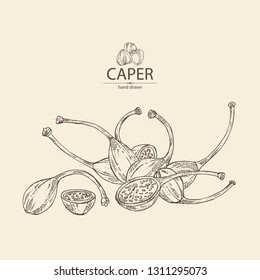 Background with caper: caper pod. Vector hand drawn illustration.