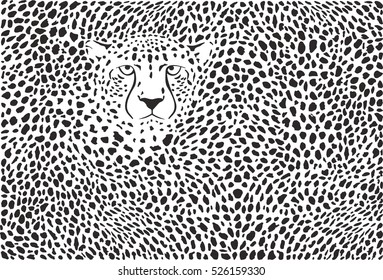 Background cheetah skins and head