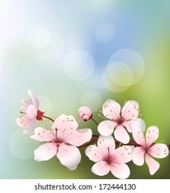 Background with cherry blossom in the morning light. Vector illustration.