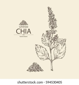 Background with chia: plant and seeds. Superfood. Hand drawn