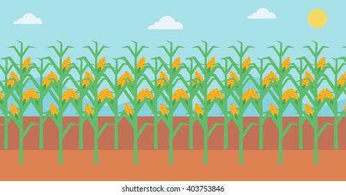 Background of corn field.