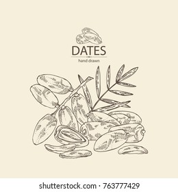Background with date fruit: branch, date fruits and leaves. Vector hand drawn illustration.