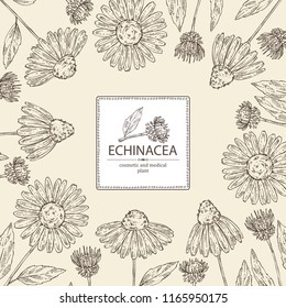 Background with echinacea: plant, leaves and echinacea flowers. Cosmetics and medical plant. Vector hand drawn illustration.