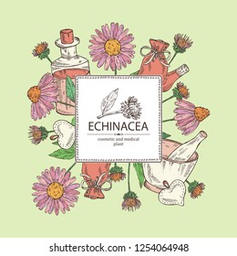 Background with echinacea: plant, leaves and echinacea flowers. Cosmetic and medical plant. Vector hand drawn illustration.