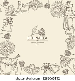 Background with echinacea: plant, leaves and echinacea flowers. Cosmetic and medical plant. Vector hand drawn illustration
