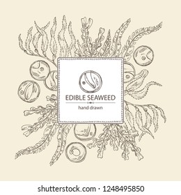 Background with edible seaweed: laminaria seaweed, macrocystis, chlorella seaweed and fucus. Brown algae. Vector hand drawn illustration.