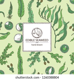 Background with edible seaweed: laminaria seaweed, macrocystis, chlorella seaweed and fucus. Brown algae. Vector hand drawn illustration