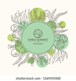 Background with edible seaweed: laminaria seaweed, macrocystis, chlorella seaweed and fucus. Brown algae. Vector hand drawn illustration