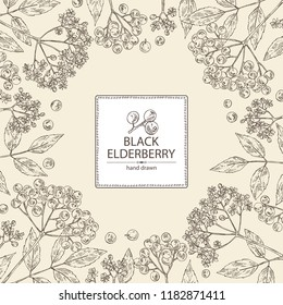 Background with elderberry black: branch of elderberry , berries, flowers and leaves. Vector hand drawn illustration.