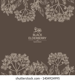 Background with elderberry black: branch with elderberry flowers and leaves. Cosmetic and medical plant. Vector hand drawn illustration