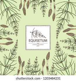 Background with equisetum: plant and escape equisetum. Horsetail. Cosmetics and medical plant. Vector hand drawn illustration.