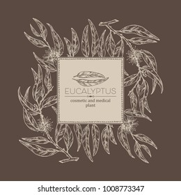 Background with eucalyptus: leaves and flowers. Cosmetics and medical plant. Vector hand drawn illustration.