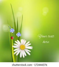Background with flowers and green grass in summer time. Vector illustration.
