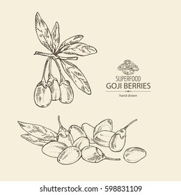 Background with goji: plant and berries. Superfood. Hand drawn.