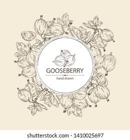 Background with gooseberry: branch of gooseberry, berries and leaves. Vector hand drawn illustration.