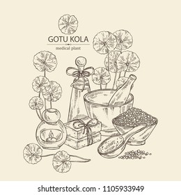 Background with gotu kola: branch of gotu kola. Centella asian. Oil, soap and bath salt . Cosmetics and medical plant. Vector hand drawn illustration