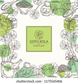 Background with gotu kola: branch of gotu kola. Centella asian. Oil, soap and bath salt . Cosmetics and medical plant. Vector hand drawn illustration
