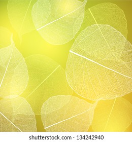 Background with green and white leaves.