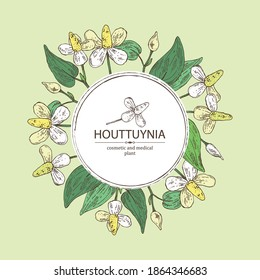 Background with houttuynia: houttuynia flowers and leaves. Houttuynia cordata, Cosmetic and medical plant. Vector hand drawn illustration