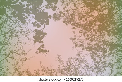 The background image of leaves and the sky from the bottom view