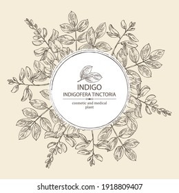 Background with Indigofera tinctoria: plant, flowers and leaves of indigo. Cosmetic and medical plant. Vector hand drawn illustration.