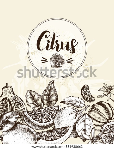 Background with Ink hand drawn citrus fruits. Template for design leaflets, labels, banners. Vector illustration.