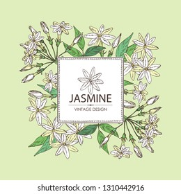 Background with jasmine: flower and leaves.Cosmetic, perfumery and medical plant. Vector hand drawn illustration.