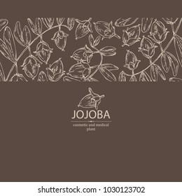 Background with jojoba: nuts, branch and fruit. Cosmetics and medical plant. Vector hand drawn illustration