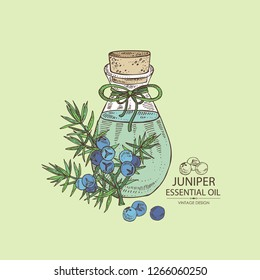 Background with juniper berries and bottle of essential oil. Cosmetic, perfumery and medical plant. Vector hand drawn illustration