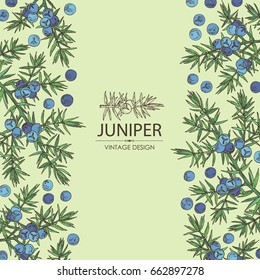 Background with juniper: berries juniper and a branch. Cosmetic, perfumery and medical plant. Vector hand drawn illustration.