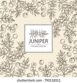 Background with juniper: berries juniper and a branch. Cosmetics and medical plant. Vector hand drawn illustration