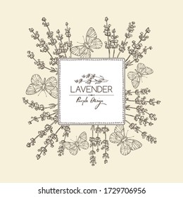 Background with lavender and butterfly: twig, lavender flowers and leaves. Perfumery, cosmetics and medical plant. Vector hand drawn illustration.
