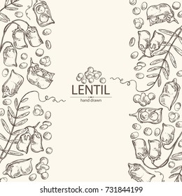 Background with lentil: leaf, plant, pod and seed of lentil. Vector hand drawn illustration