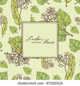 Background with linden flower . hand drawn